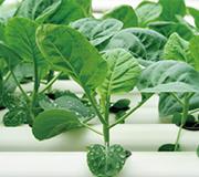 野菜水耕栽培士