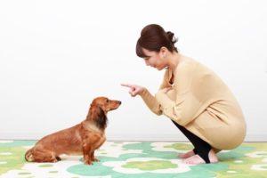 犬のマズルコントロールとは?基本知識とやり方について