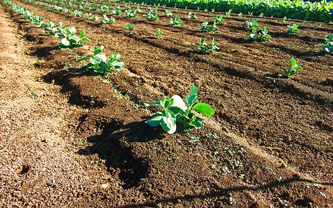 日本生活環境支援協会 | ベランダ菜園士