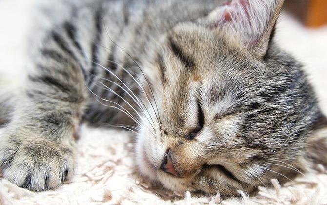 日本生活環境支援協会 | 猫の育て方アドバイザー