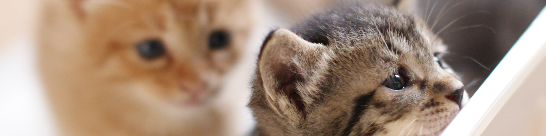 日本生活環境支援協会 | 犬・猫ペットブリーダー認定試験