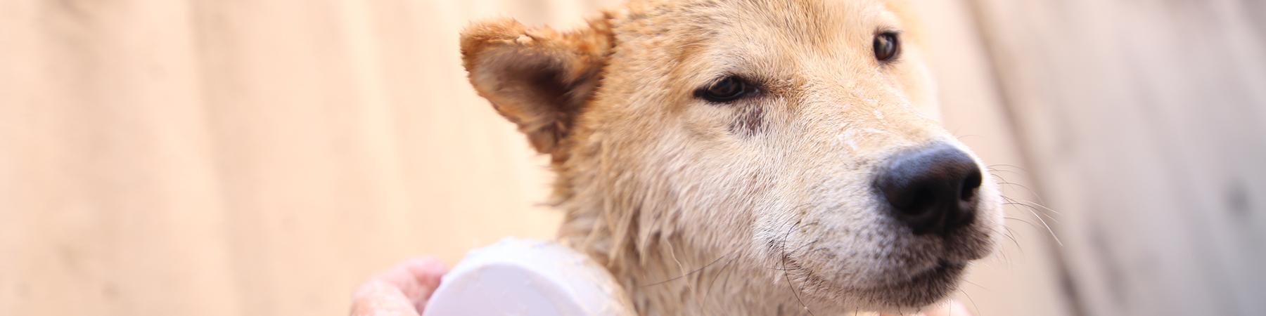 日本生活環境支援協会 | 犬猫介護アドバイザー認定試験