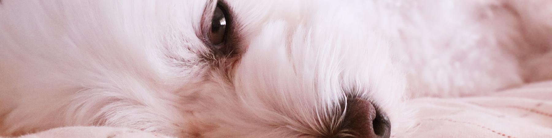 日本生活環境支援協会 | 犬猫ストレスケアアドバイザー認定試験