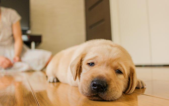 日本生活環境支援協会 | 犬猫ストレスケアアドバイザー
