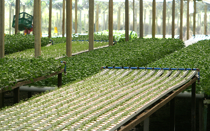 日本生活環境支援協会 | 水耕栽培士